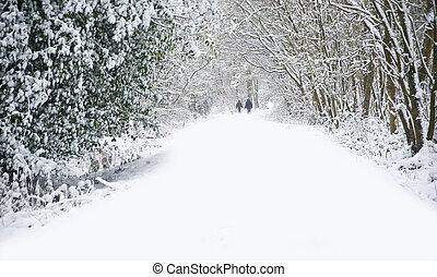 bello, camminare, inverno, famiglia, neve, profondo, scena, vergine, foresta, passerella, percorso, cani