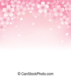 bello, ciliegia, fondo, fiore