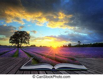 bello, concetto, atmosferico, maturo, vibrante, campagna, campi, immagine, cielo, lavanda, creativo, tramortire, tramonto, inglese, nubi, sopra, paesaggio