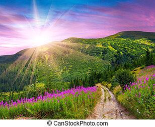 bello, estate, montagne, flowers., rosa, paesaggio, alba