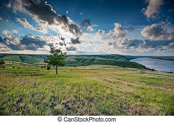 bello, estate, solitario, albero, lago, steppa, paesaggio