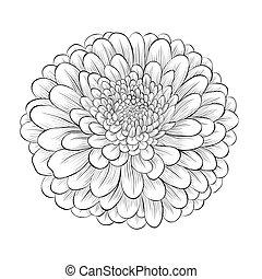bello, fiore, isolato, sfondo nero, monocromatico, bianco