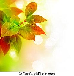 bello, foglie