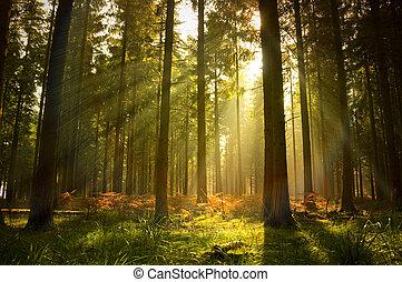 bello, foresta