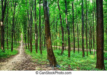 bello, foresta verde