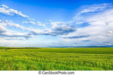bello, hdr, frumento, immagine, campo, nuvola, mountain., paesaggio