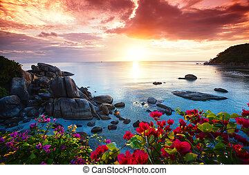 bello, koh samui, gloria, ricorso, mattina, tranquillo, spiaggia