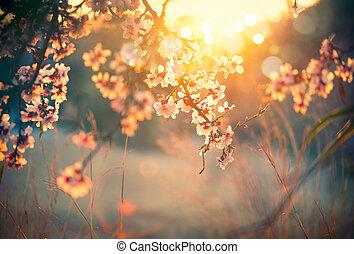 bello, natura, sole, azzurramento, albero, scena, bagliore