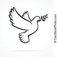 bello, pace, colomba, bianco, vettore, contorno