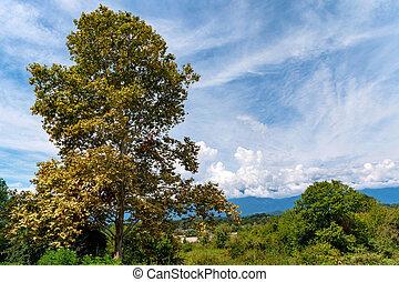 bello, paesaggio, albero, estate, steppa, alto