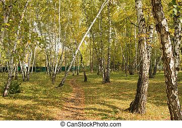 bello, parco città, albero, autunno, fondo, multi-colored
