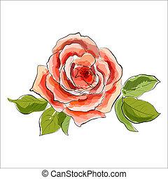 bello, stilizzato, rose., illustrazione, acquarello, rosso