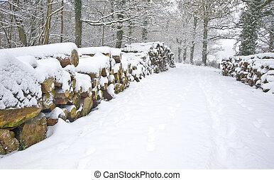 bello, taglio, accatastato, inverno, neve, profondo, scena, vergine, foresta, fresco, percorso, lati, legname