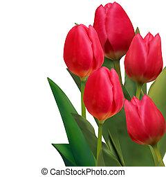 bello, tulips, eps, scheda, 8, template., rosso