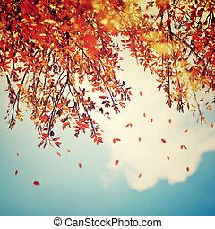 bello, vendemmia, autunno, fondo