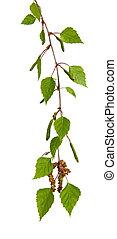 betulla, foglie