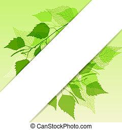 betulla, fondo, fresco, leaves., verde