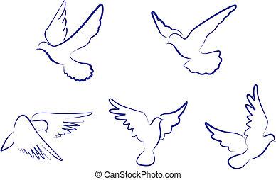 bianco, colombe