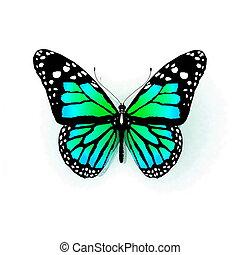 bianco, farfalla, isolato