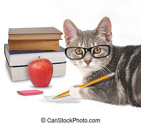 bianco, libri, gatto, far male, scrittura