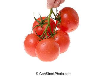 bianco, pomodori, suolo, mazzo