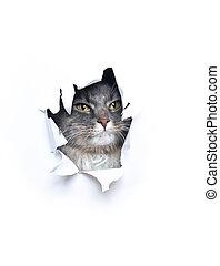bianco, strappato, carino, attraverso, dall'aspetto, gatto, buco, carta