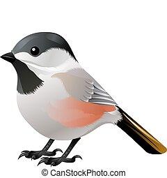 bianco, uccello nero, diretto