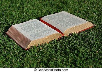 bibbia, cristiano, cristianesimo, vangelo, aperto, o