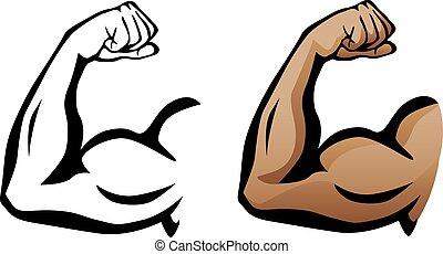 bicep, muscolare, flessione, braccio
