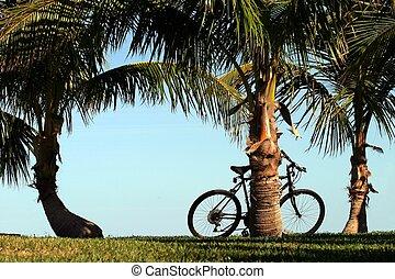 bicicletta, palme