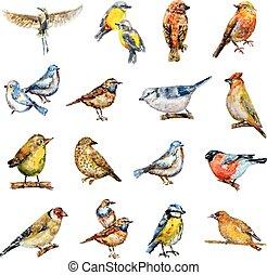 birds., pittura watercolor, collezione