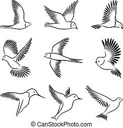 birds., vettore, illustration.