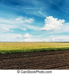 blu, campi, agricoltura, cielo, profondo