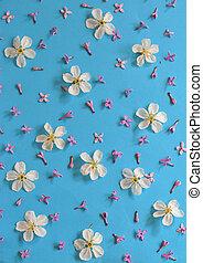 blu, ciliegia, sfondo bianco, fiori