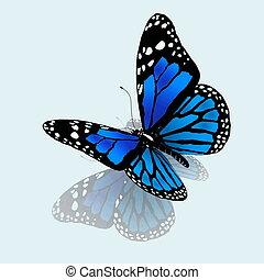 blu, colorare, farfalla