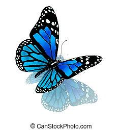 blu, colorare, farfalla, bianco