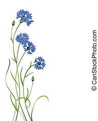 blu, cornflower, isolato, mazzolino, modello