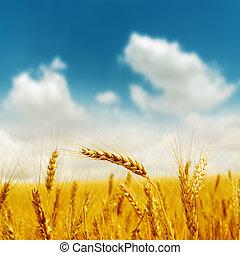 blu, dorato, cielo, nuvoloso, sotto, raccogliere