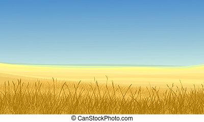 blu, erba zona, giallo, sky.