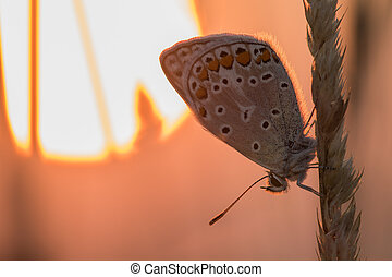 blu, farfalla, sole, lama, mattina, presto, fondo, arancia