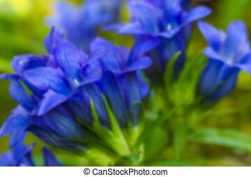 blu, flower., naturale, verde