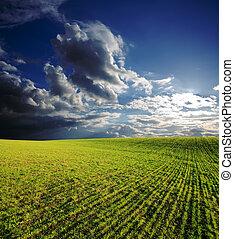 blu, nubi, cielo, profondo, campo, verde, sotto, agricolo, erba, tramonto