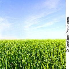 blu, nubi, prato, cielo, erba verde