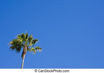 blu, palma
