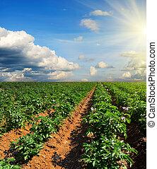 blu, patata, zona cielo, tramonto, sotto