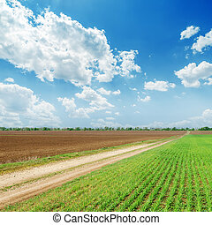 blu, primavera, cielo, nuvoloso, campi