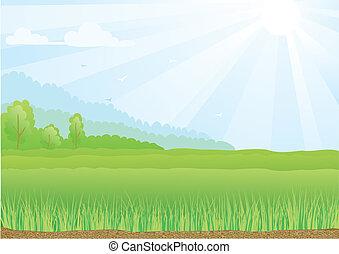 blu, raggi, sky., sole, illustrazione, campo, verde