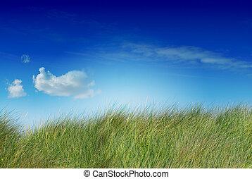 blu, saturato, lato, immagine, cielo, uno, uncutted, verde, erba alta, nuvola, sinistra