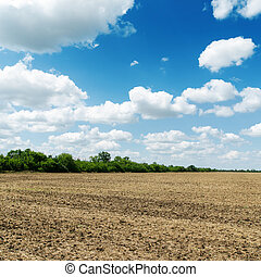 blu, secondo, cielo, nuvoloso, campo, sotto, agricoltura, raccolta