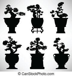 bonsai, pianta, fiore, albero, vaso